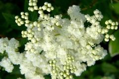 盛夏の花(Midsummer)