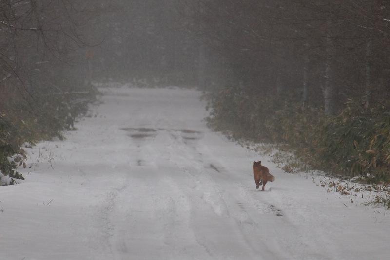 よう に 降りしきる 雪が 積もる